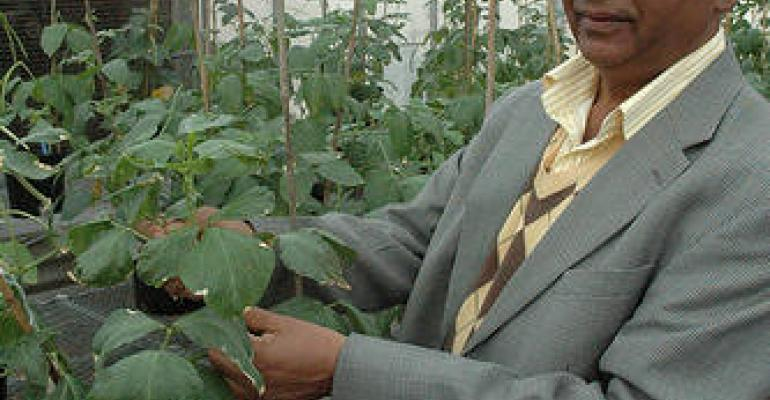 Promising results for breeding drought-resistant cowpea