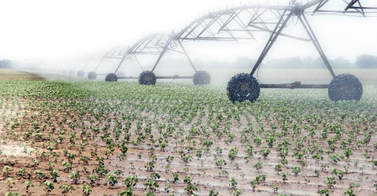 Irrigating cotton makes 'cents'