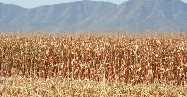 corn with mountains