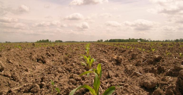 Corn growers budget for fertilizer price increase