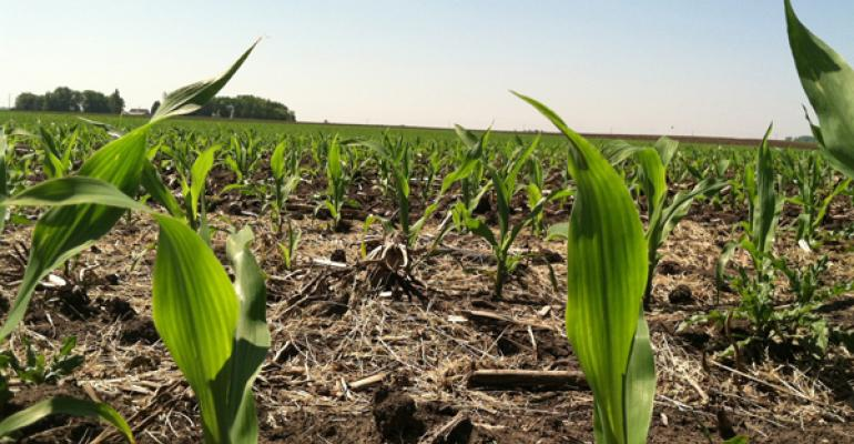June 24 Crop Progress: Corn Crop Nearing Total Emergence, Soybean Crop Nearing Planting Completion