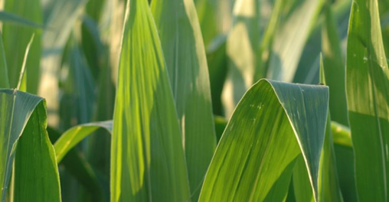 First Iowa Confirmation of Resistance to Bt Corn by Western Corn Rootworm