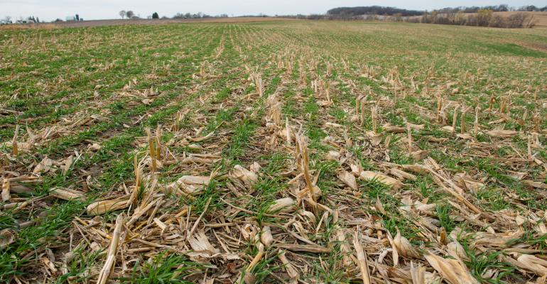 cover crops and manure