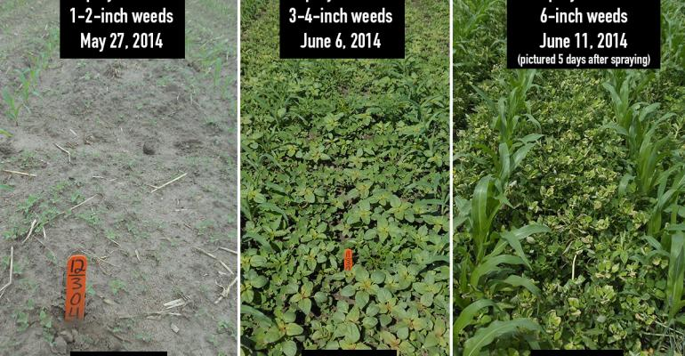 Critical weed control window in corn 2014 711 days Penalty for a fiveday delay 40 buacre View more weedcontrol timing examples