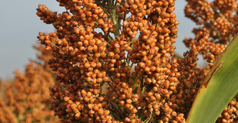 Alta Seeds introduces two grain sorghum hybrids and a hybrid pearl millet for the 2015 planting seasonAG1101 is an earlymaturity bronzecolored grain sorghum broadly adapted for use across the High Plains and Midwest The hybrid is wellsuited to dryland farming and features drought tolerance uniformity and threshabilityFor more information call 8778067333 or visit wwwAltaSeedscom