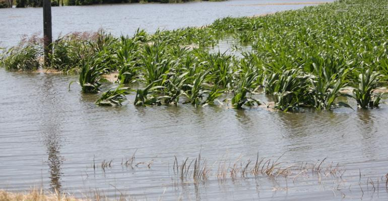 Will flooding exacerbate resistant weed problems?