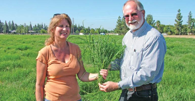 New Teff forage grass being tested in California