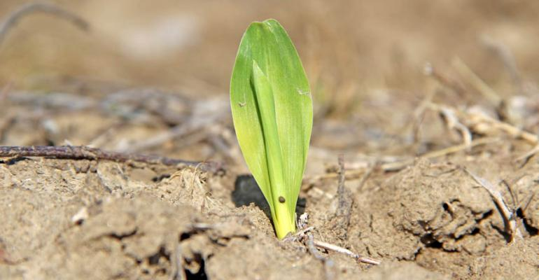 How should farmers price corn silage?