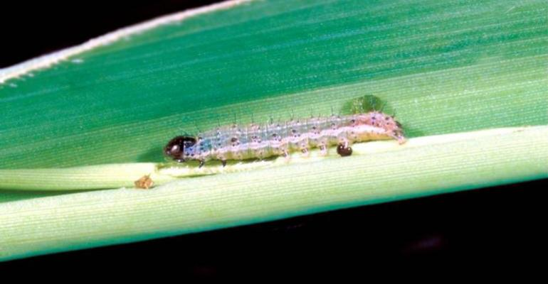 Top 5 ag stories: Preventing combine fires and fighting the fall armyworm