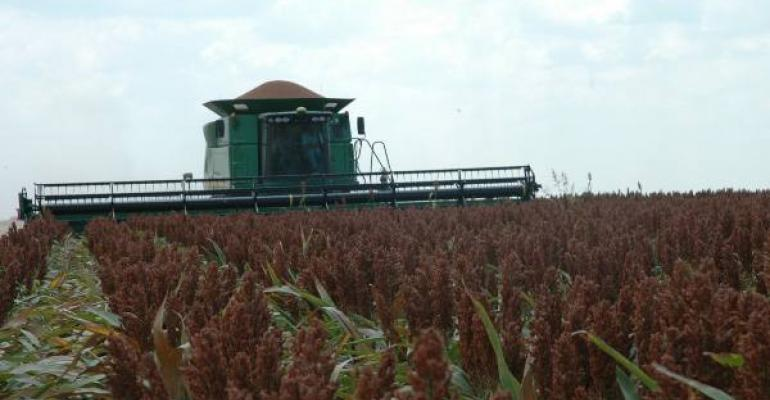 Sorghum harvest in Northeast Texas is winding down with excellent yields reported
