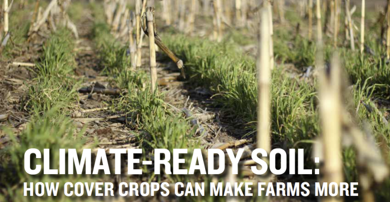 Can cover crops help farmers combat climate change, drought?