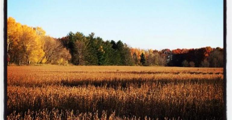 Top 5 Ag stories: Fall weed control;  cash rent vs. farmland price and the organic market