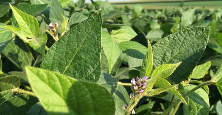 Monsanto gets import approval for their latest tech  Roundup Ready 2 Xtend soybeans however the firm is still waiting for EPA to approve overthetop use of dicamba on the crop which is a key feature for the technology