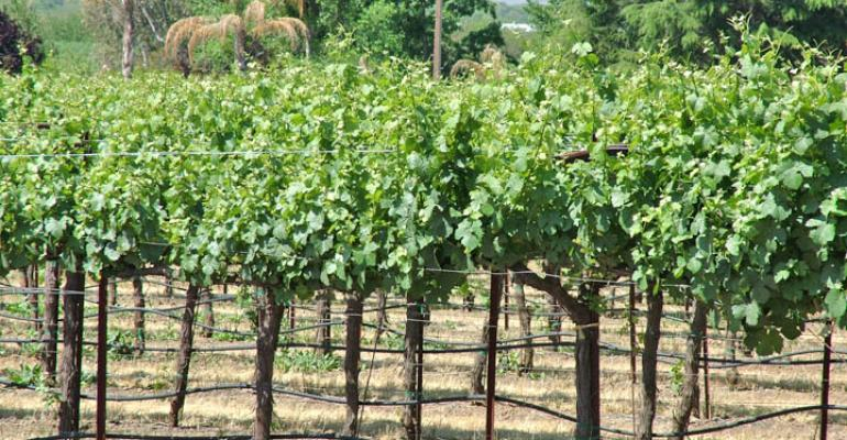 Major Central Coast vineyard losses reported from April frost
