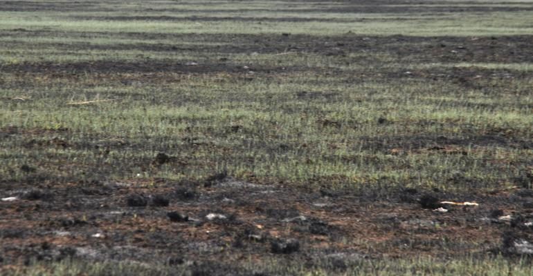 new grass emerging after Kansas wildfires