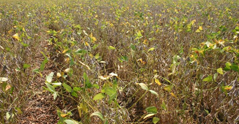 Monsanto explains actions as dicamba drift fallout continues