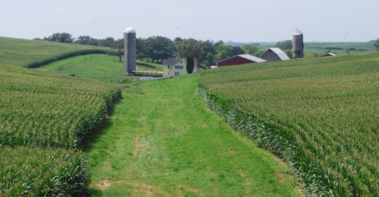 cornfields with farm in background