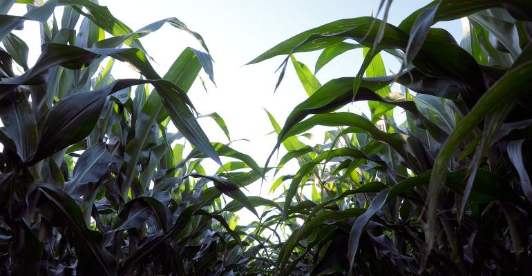 outlook-corn-image-1540.jpg