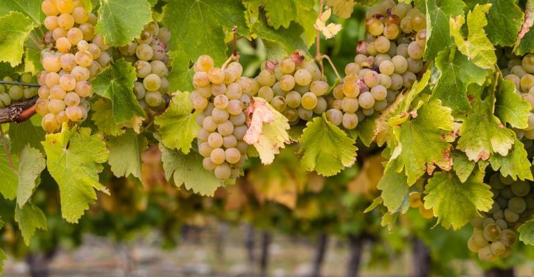 ripe chardonnay grapes vineyard Thinkstock