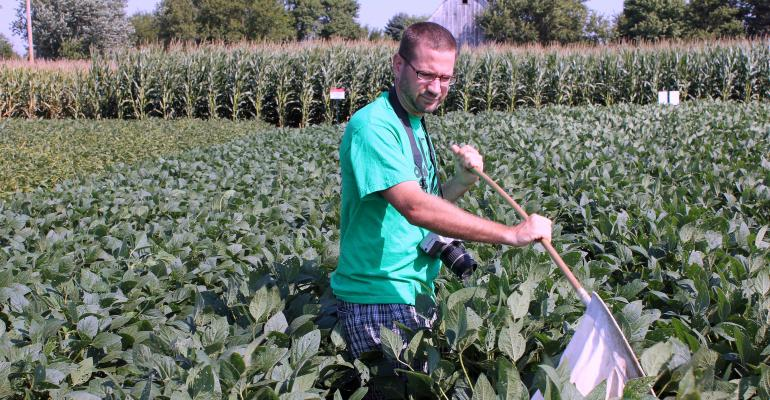Man scouting for disease on plants in field