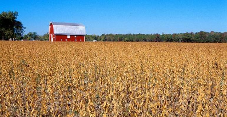 Market dynamics to push soybean prices higher