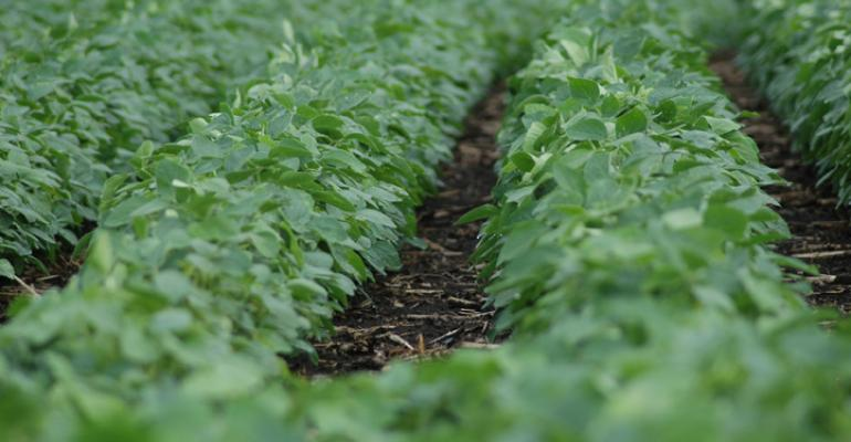 Soybean price volatility impacted by supply and demand factors