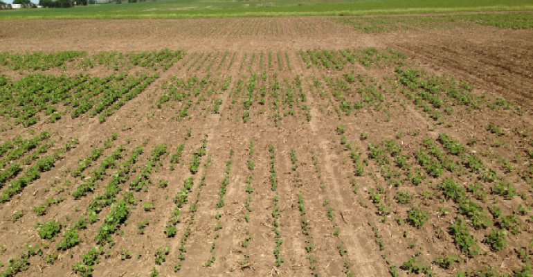 soybeans pic 1