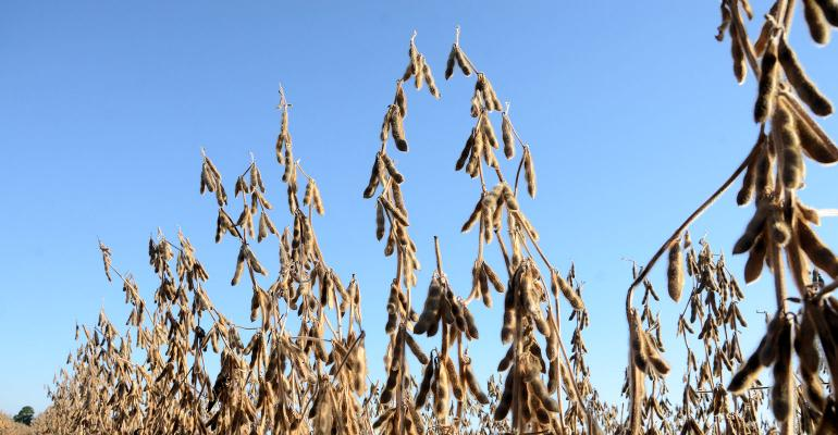 Trade talk hopes boost soybeans