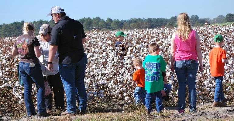 sunbelt-expo-family-cotton-a_1.jpg