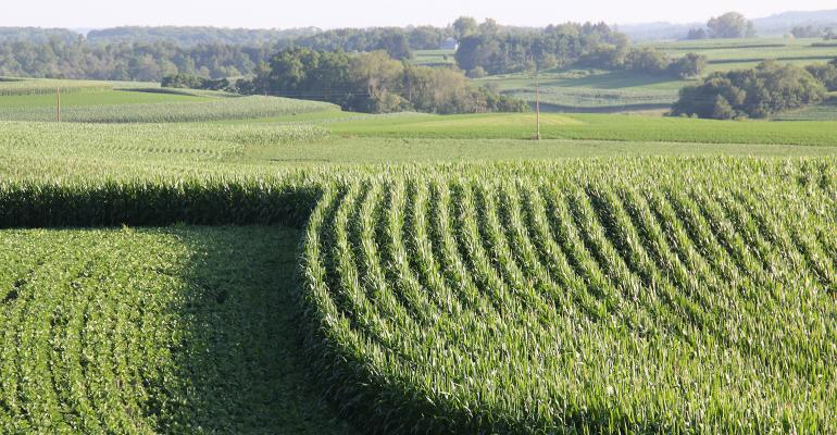 green corn and soybean fields
