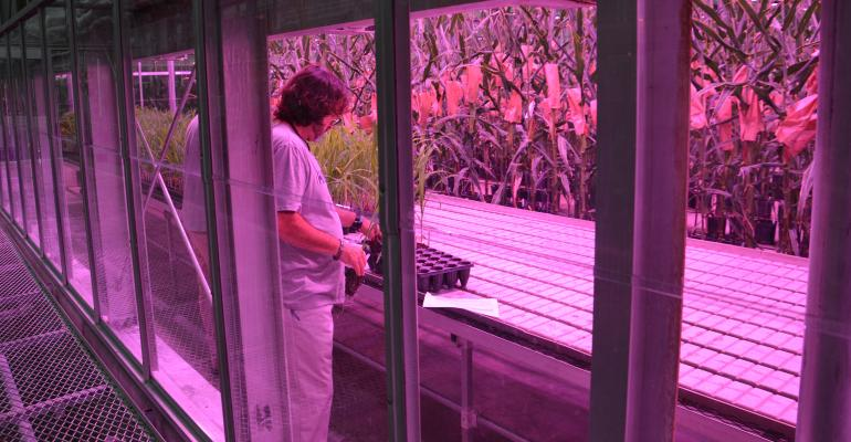 technician in Beck's greenhouse