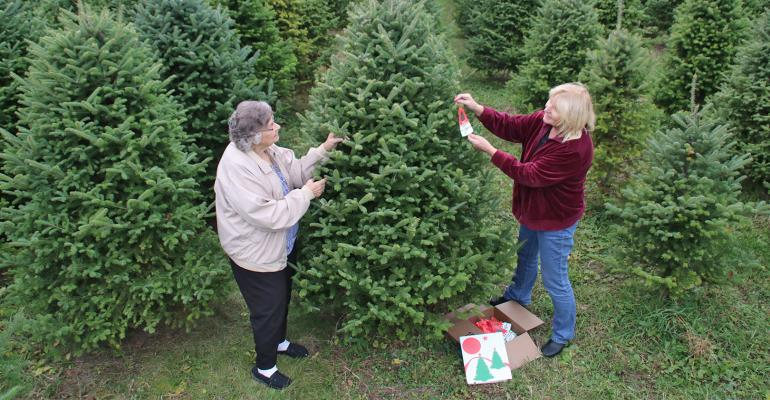 two women tagging Christmas trees