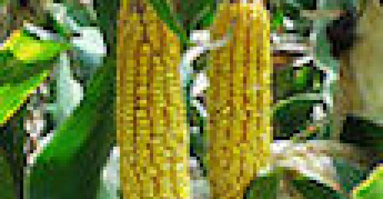 Iowa Corn Growers Elect New Officers