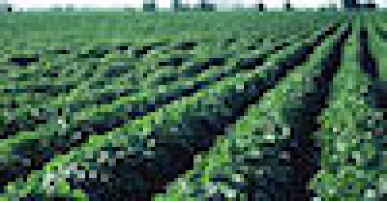 Crop Insurance Premiums Will Be Up This Year