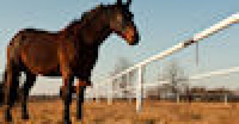 Vaccinate Horses To Protect From Mosquito-Borne Diseases