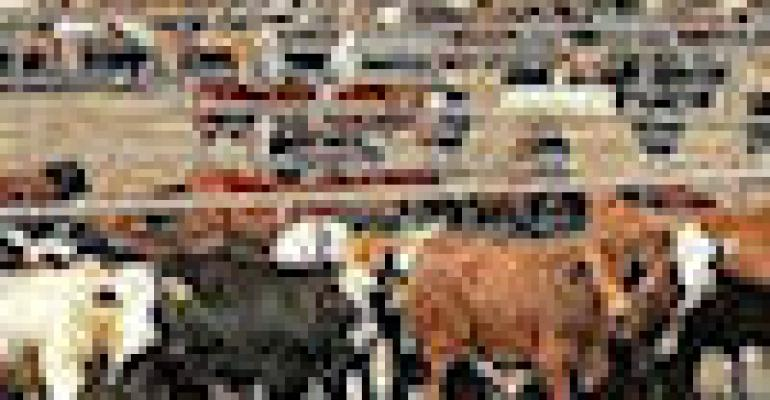 EPA Continues Crackdown On Livestock Feedlots