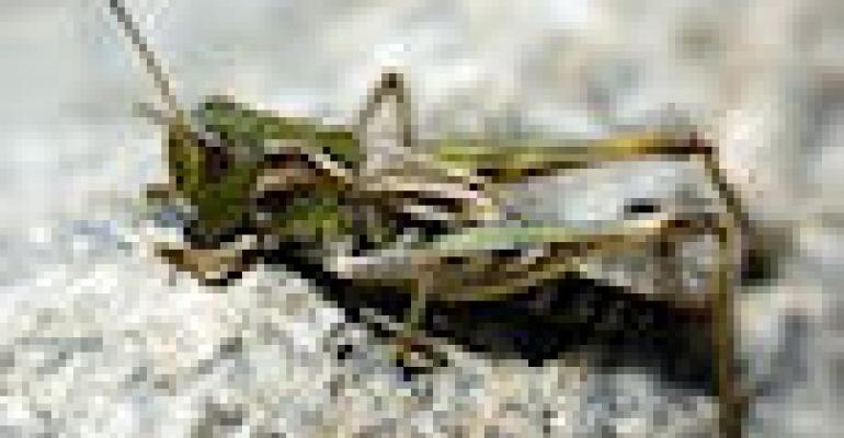 Colorado Grasshopper Finds Below Treatment Level
