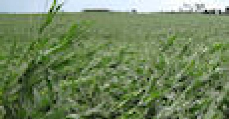 Storm Damage Is Opportunity For Cover Crops