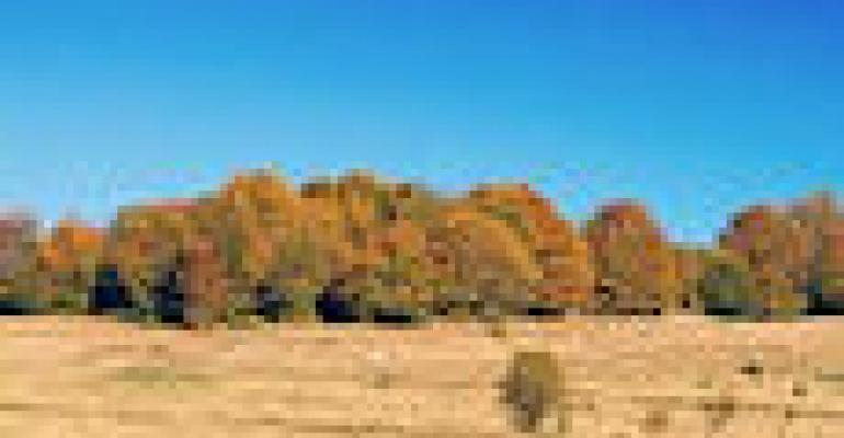 Heat, Drought Spell Death for Pine, Spruce, Fir Trees