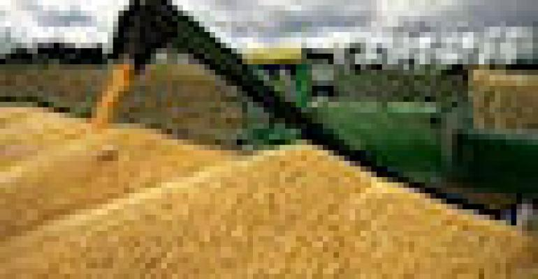 Drop in Corn Yield May Not Be Over Yet