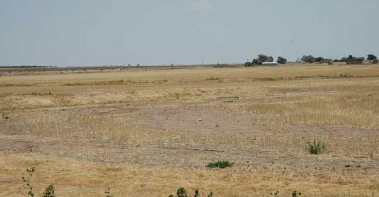 PARCHED PASTURES offer little for cattle to feed on
