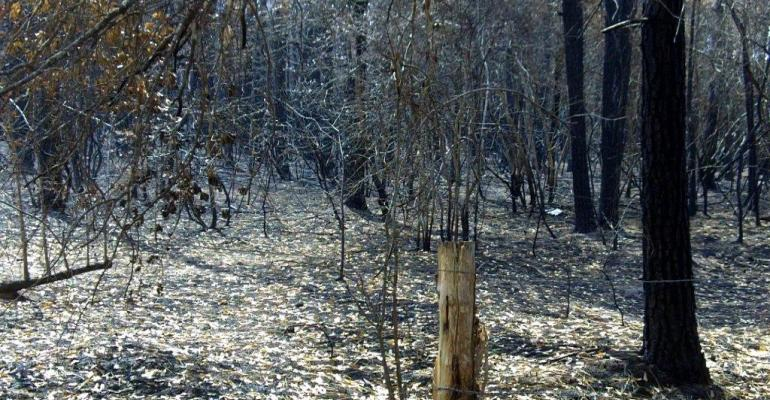 The Riley Road fire that started in early September 2011 left tens of thousands of forested acres burned