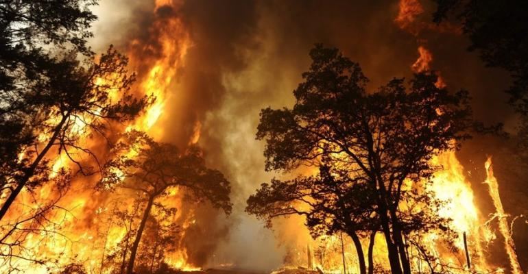 Wildfire responsible for nearly $100 million in Texas ag losses