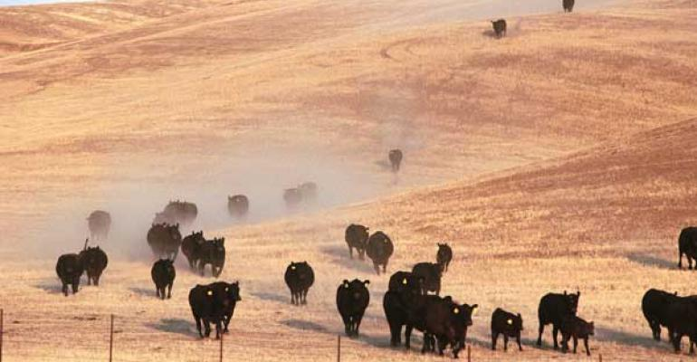 Drought-forced movements of cattle slowing down