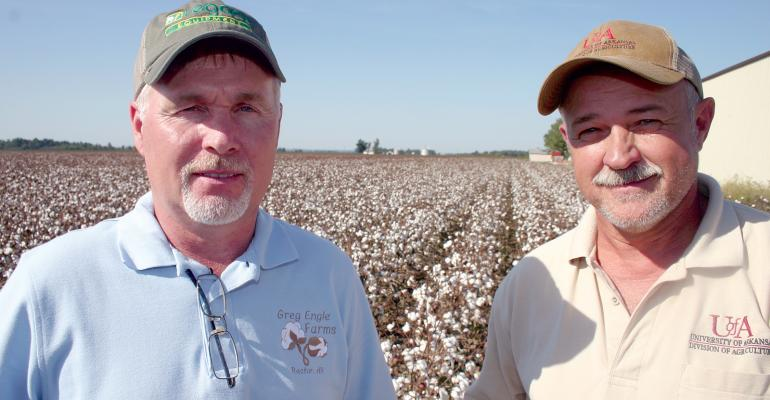 COTTON PRODUCER GREG Engle left and Andy Vangilder Clay County Extension staff chair are part of a northeast Arkansas group dedicated to combating resistant pigweeds