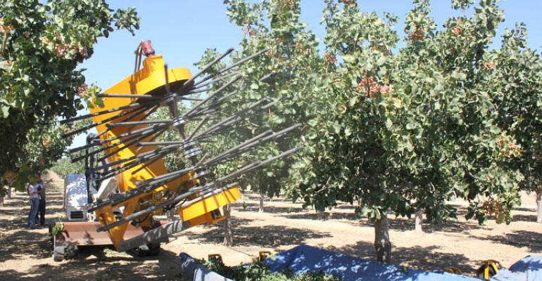 A direct canopy contact harvester head moves in on a pistachio tree in a Paramount Farming Company orchard west of Wasco Calif