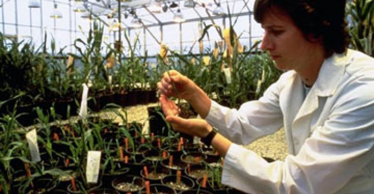Biotechnology Could Contribute to Field Crop Yield Trends