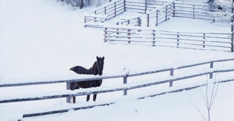 Combat cold weather nutritional stress in horses