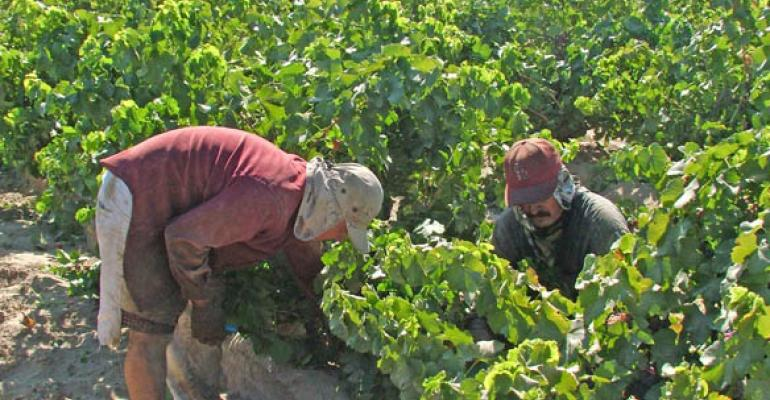 Immigration laws and agricultural needs in sustained clash