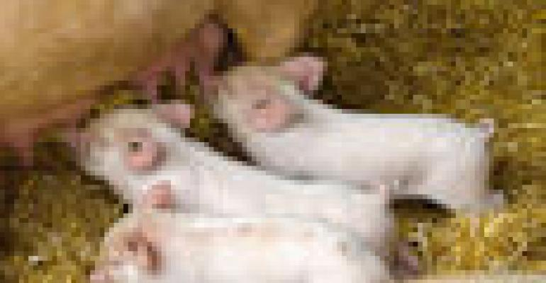 Task Force Outlines 'Road Map' to Improve Sow Lifetime Productivity
